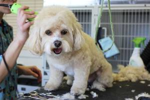 dog grooming kritter kastle green lake wi Rosendale wi