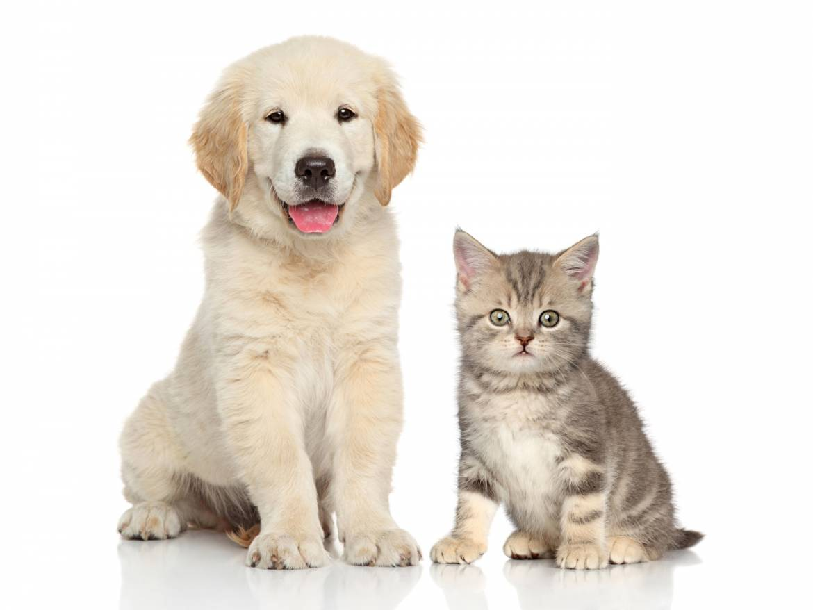 Dogs_Cats_White_background_Kittens_Puppy_Two_530365_1365x1024.jpg