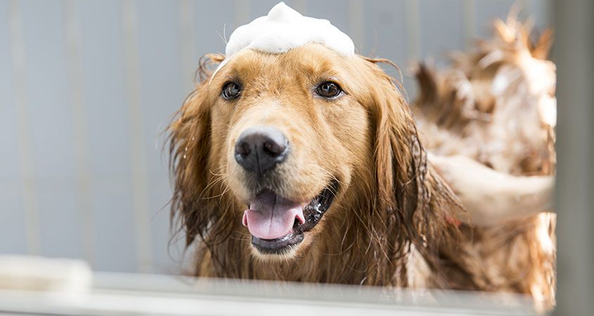 How-to-get-your-dog-to-love-bath-time.jpg