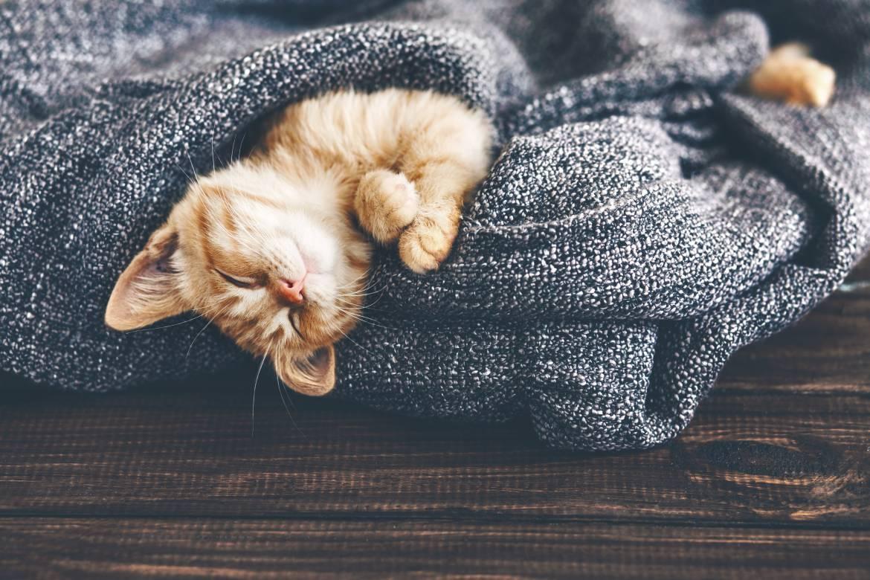 stock-photo-cute-little-ginger-kitten-is-sleeping-in-soft-blanket-on-wooden-floor-321007298.jpg